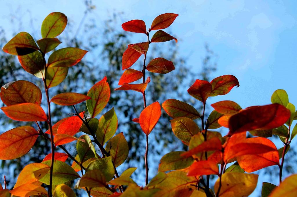 orange Picture 175