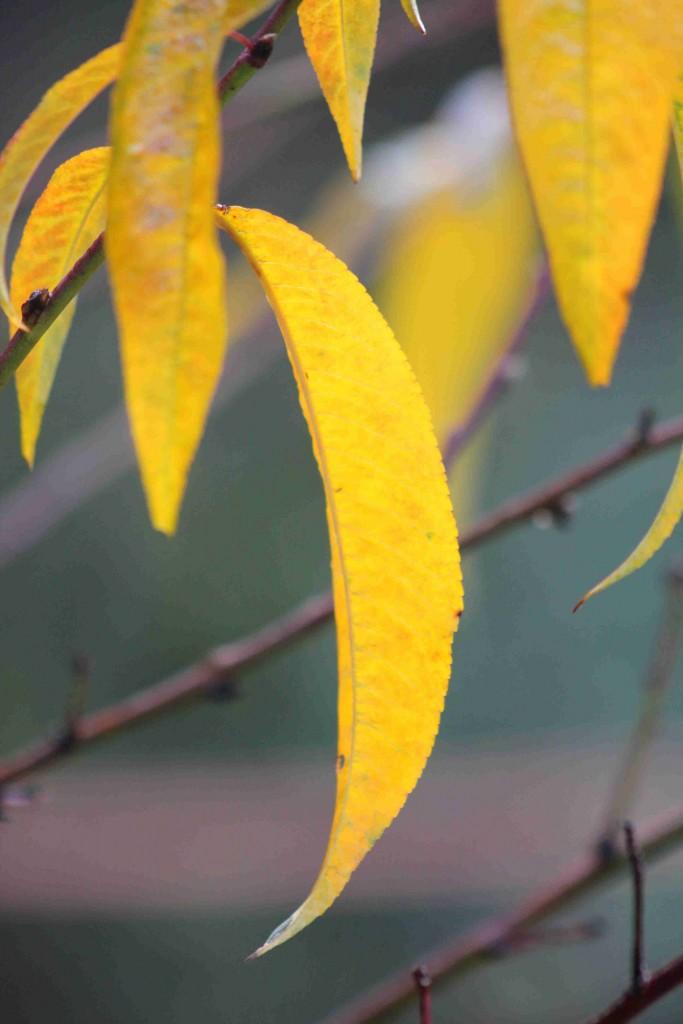 yellow IMG_5104