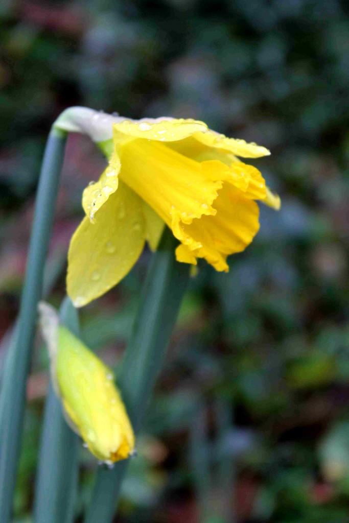 yellow IMG_6318