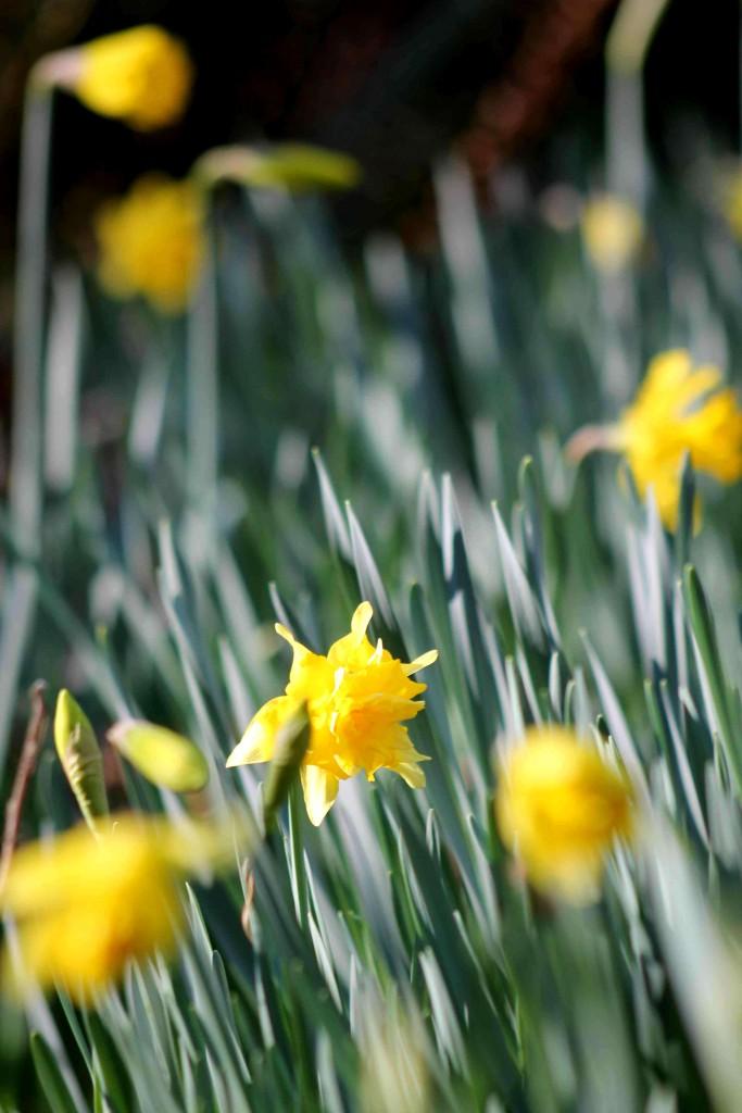 yellow IMG_6497