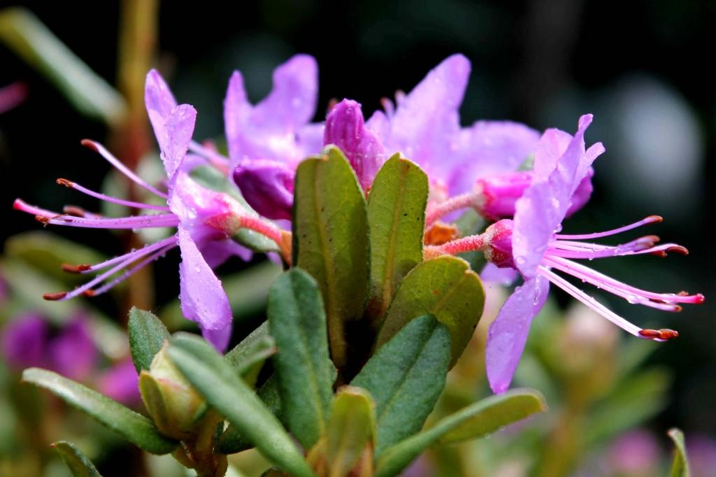 purple IMG_7621