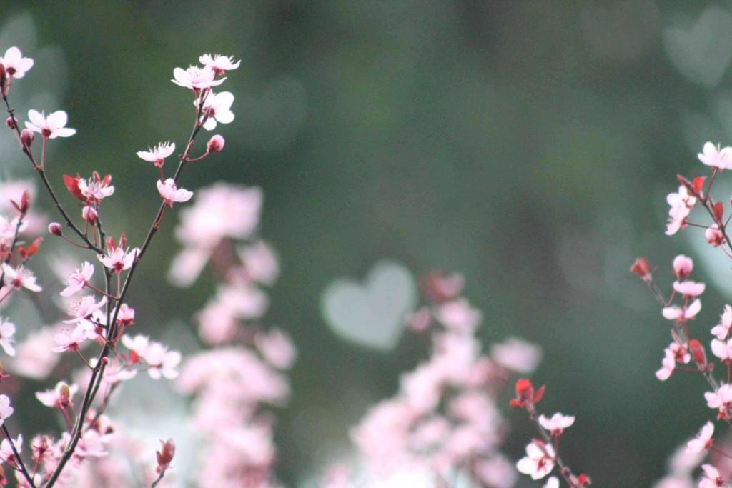 valentine IMG_6448