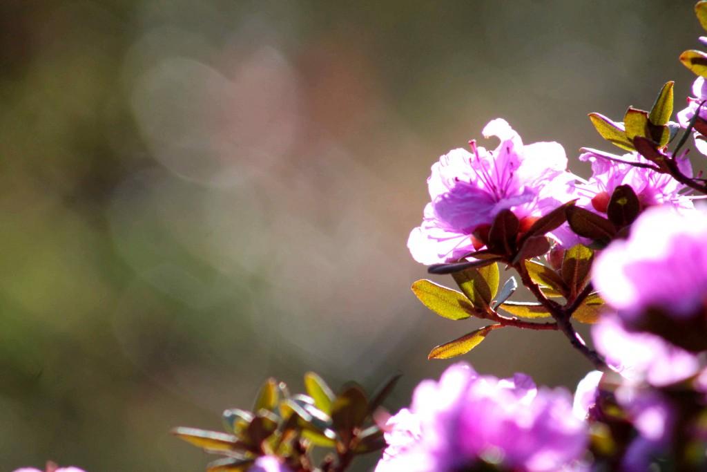 purple IMG_7876