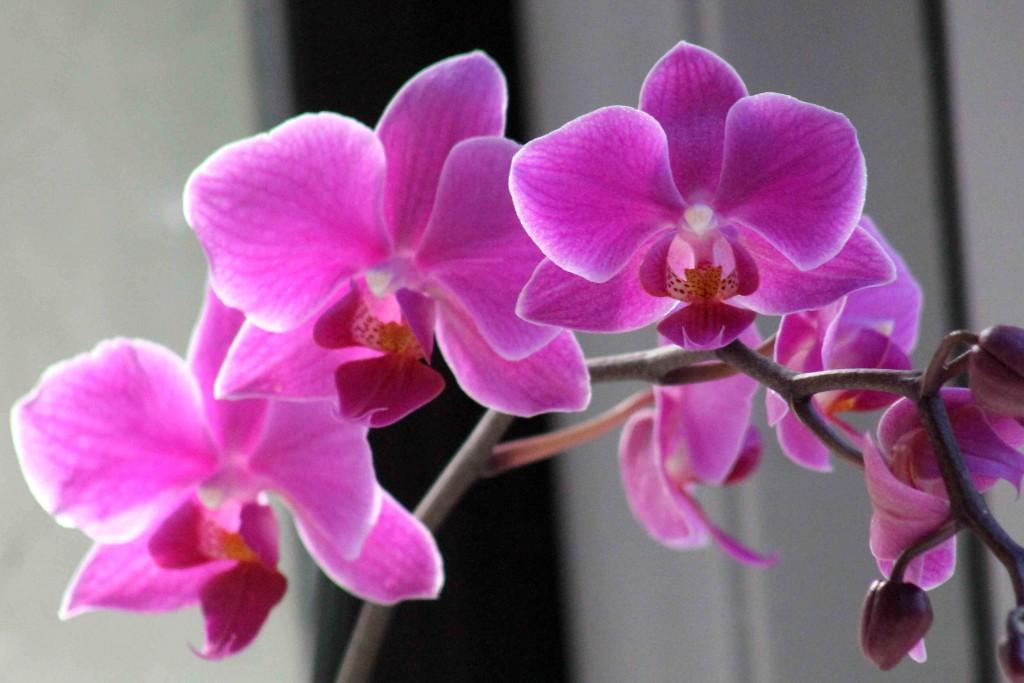 purple IMG_8045