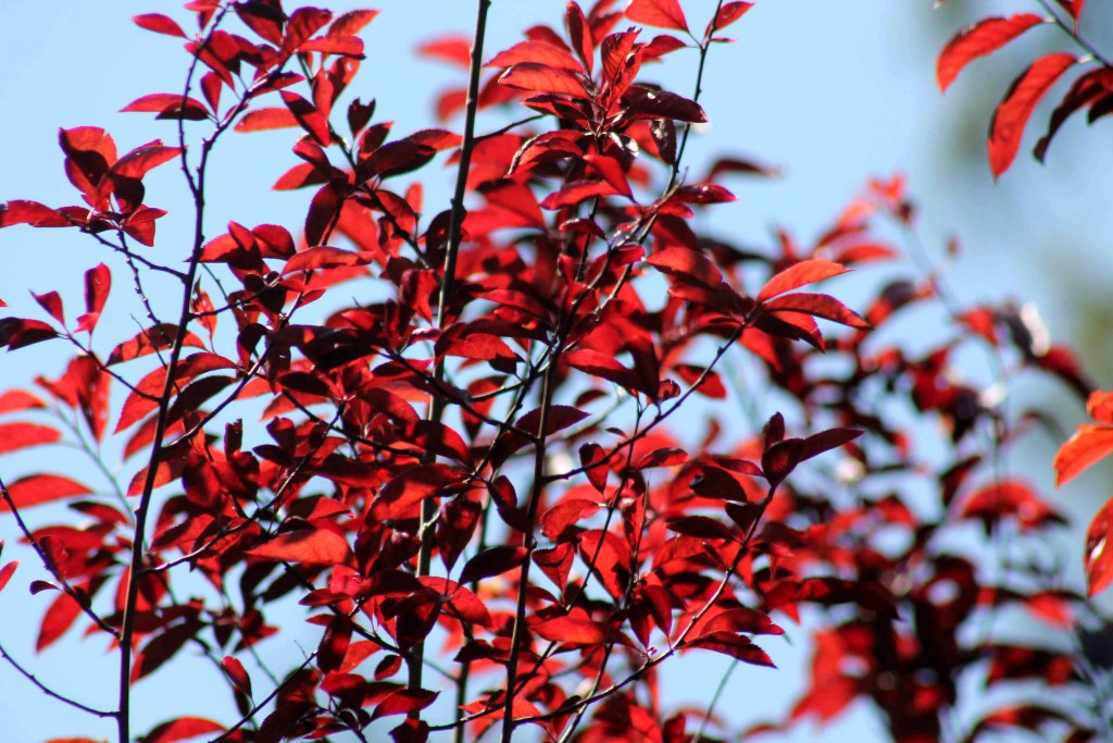red IMG_8076