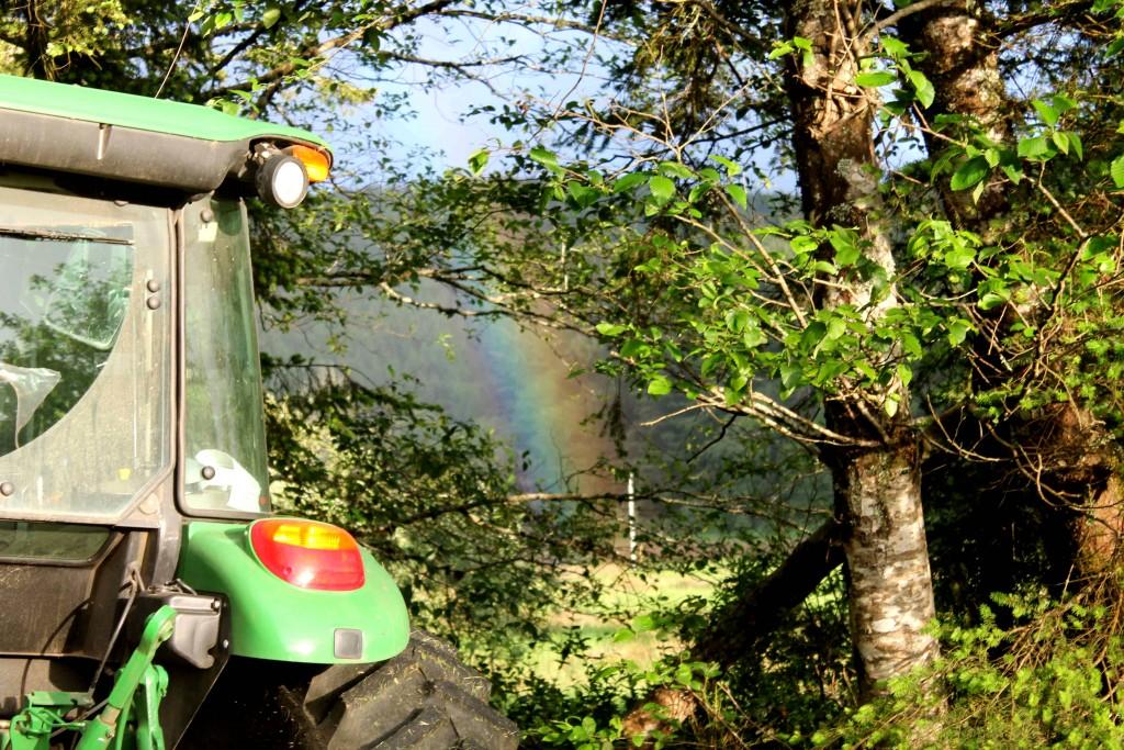 rainbow green IMG_8725