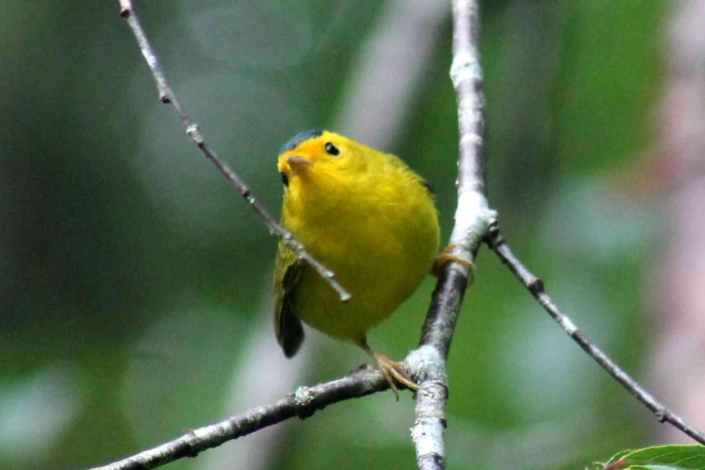 yellow IMG_9579