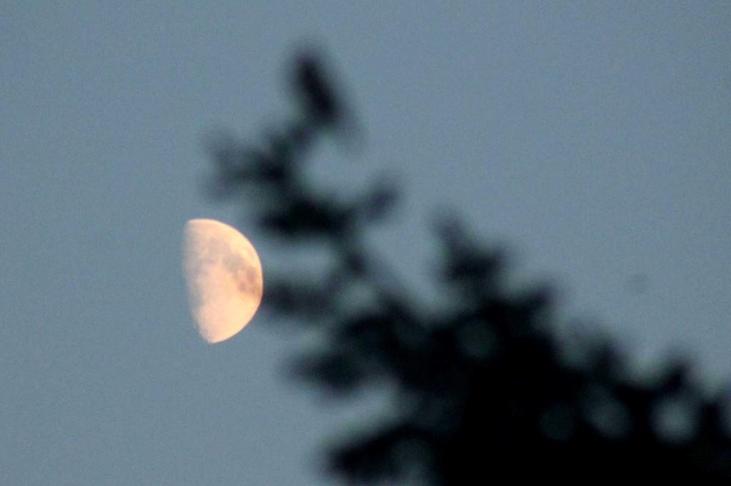 moon IMG_0233