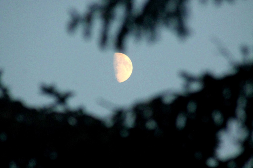 moon IMG_0241