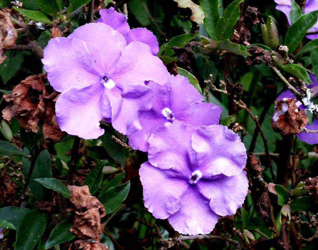 purple 20150823_173854