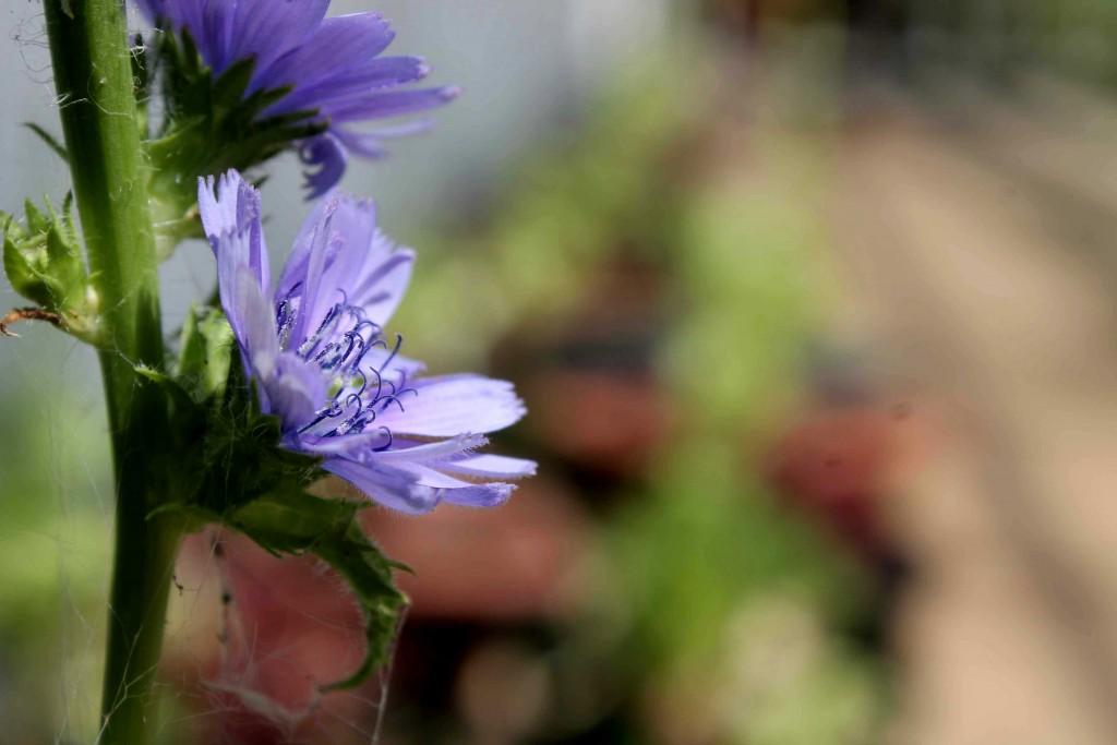 purple IMG_0151