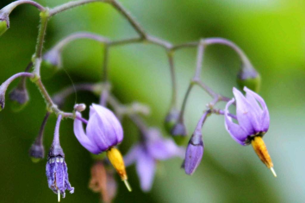purple IMG_9899