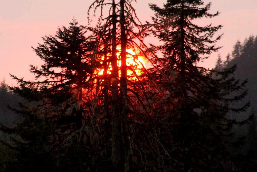 sun tree IMG_0007