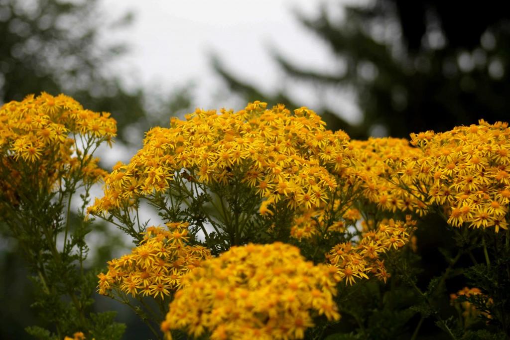 yellow IMG_0092