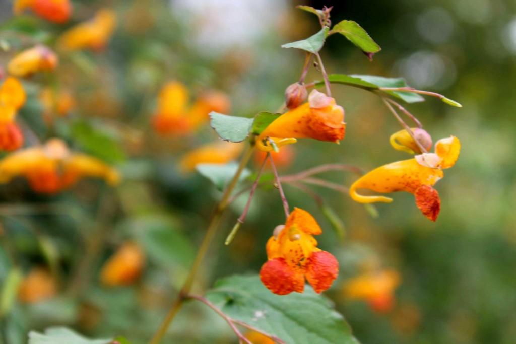 orange IMG_0309