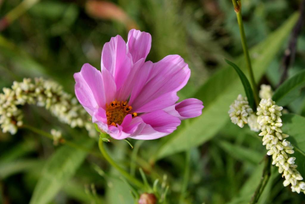 pink IMG_0336