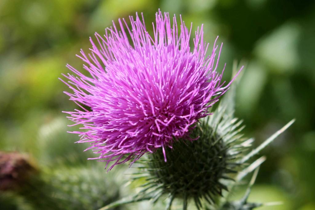 purple IMG_0291