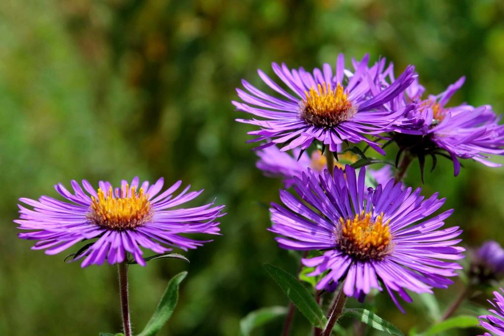 purple IMG_0448