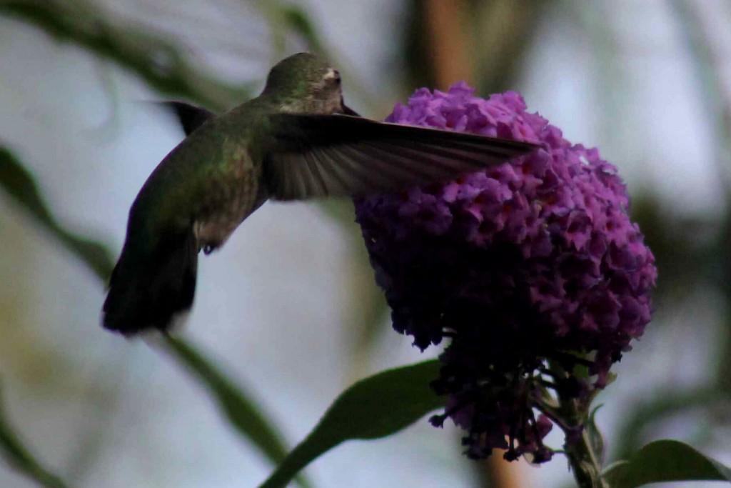purple IMG_1460