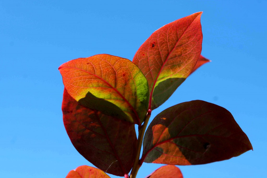 red IMG_1480