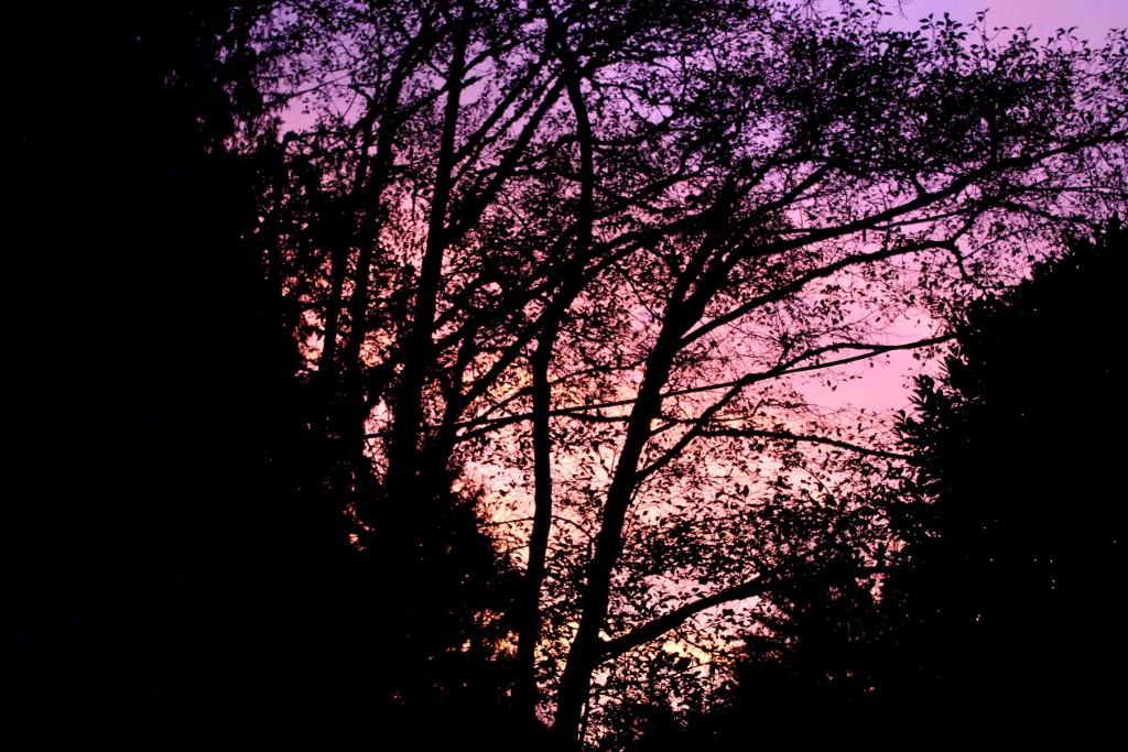 purple IMG_1720