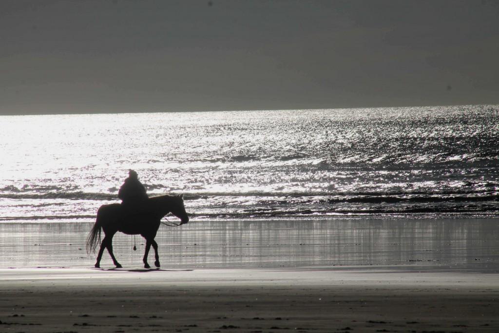 horse IMG_2218