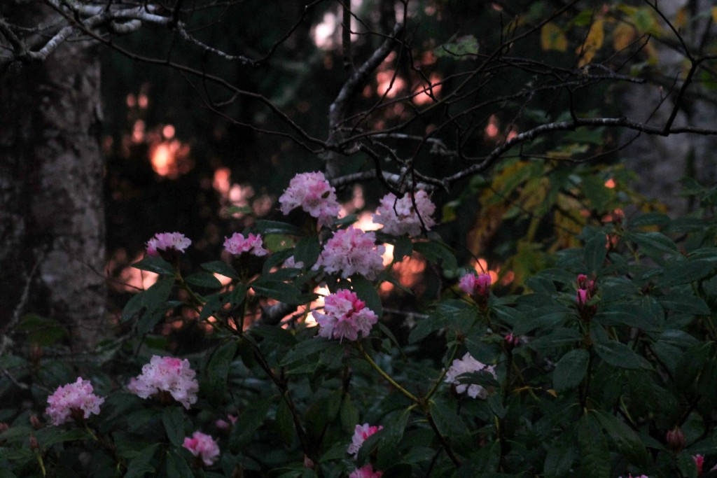pink IMG_2048