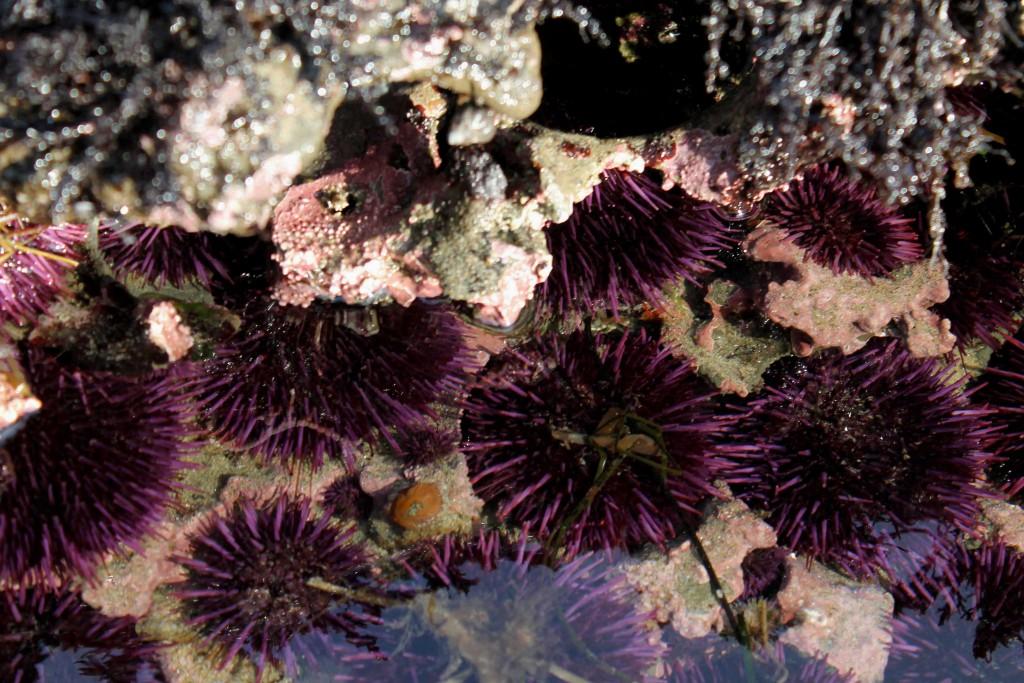 purple IMG_2311