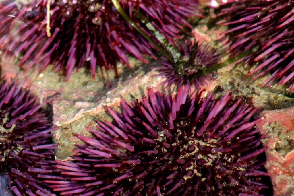 purple IMG_2326