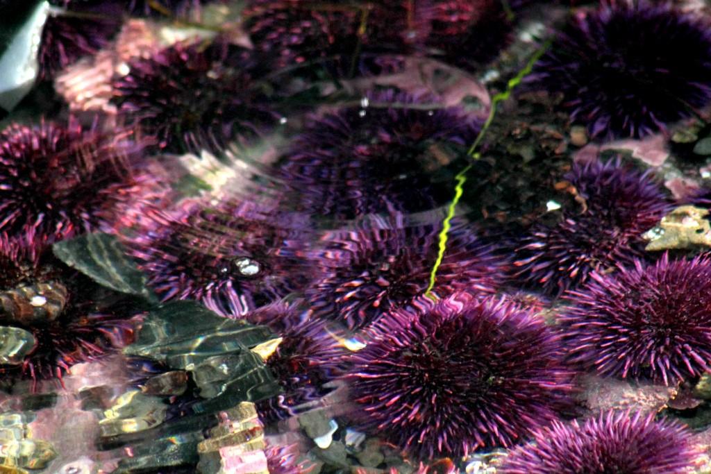 purple ripple IMG_2321