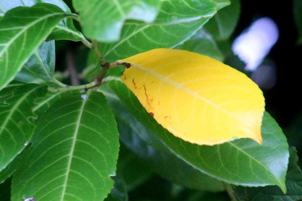 yellow IMG_2560