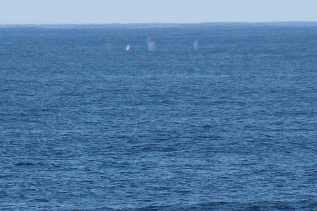 whale hike IMG_2947