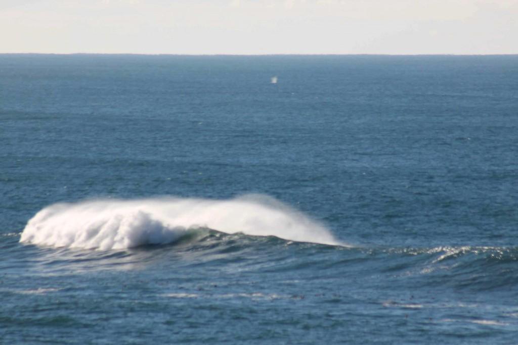 whale hike IMG_2990