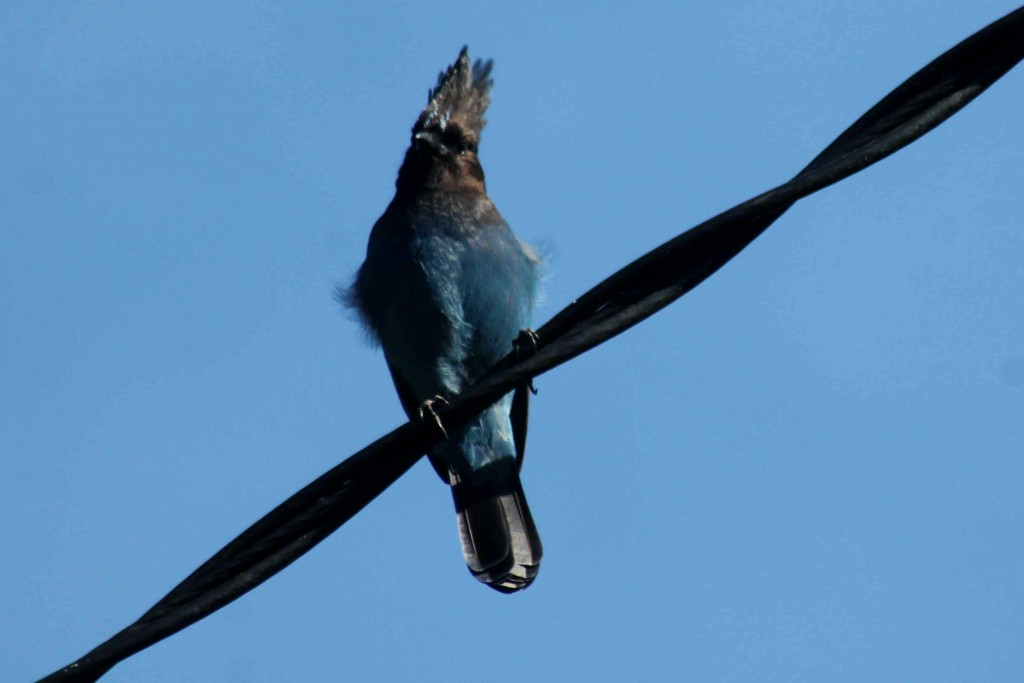 jay now 2 IMG_4232