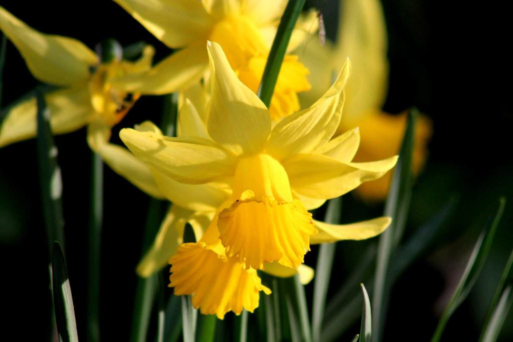 yellow IMG_4642