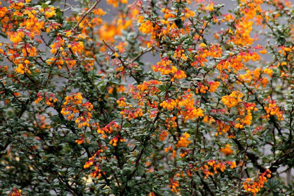 orange IMG_4962