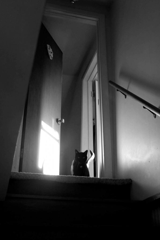 bw kitty door IMG_5106