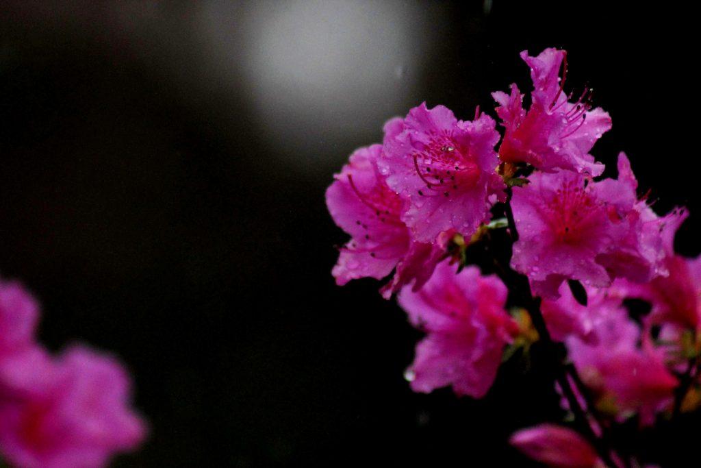 pink purple vh IMG_5725
