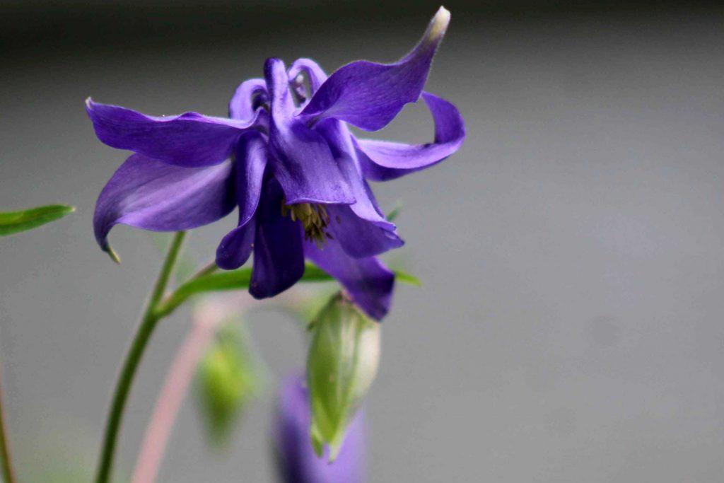 purple IMG_5806