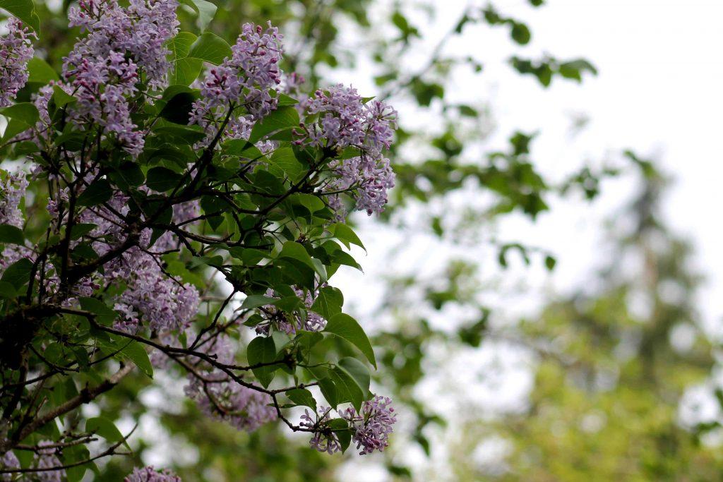 purple IMG_5808