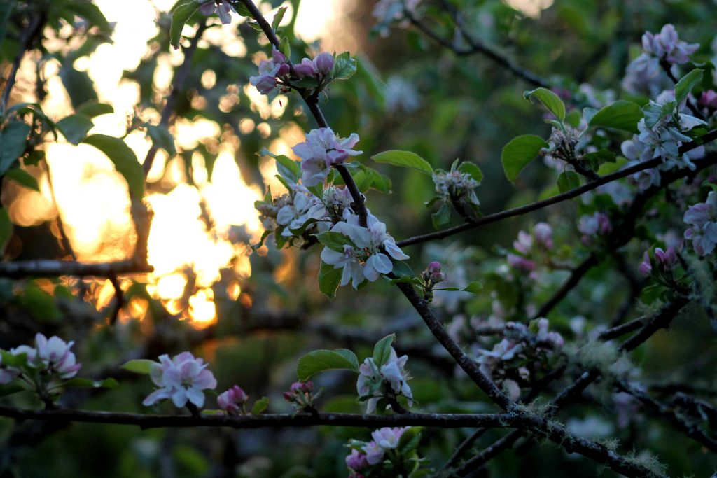 yellow sunset blossom vhIMG_5829