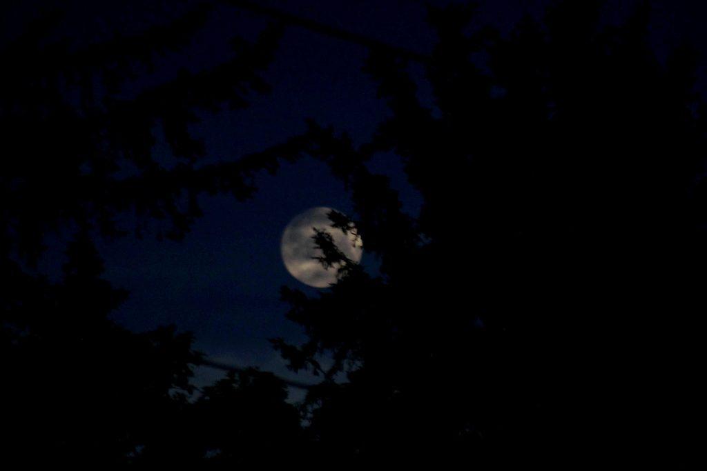 blue moon IMG_6624