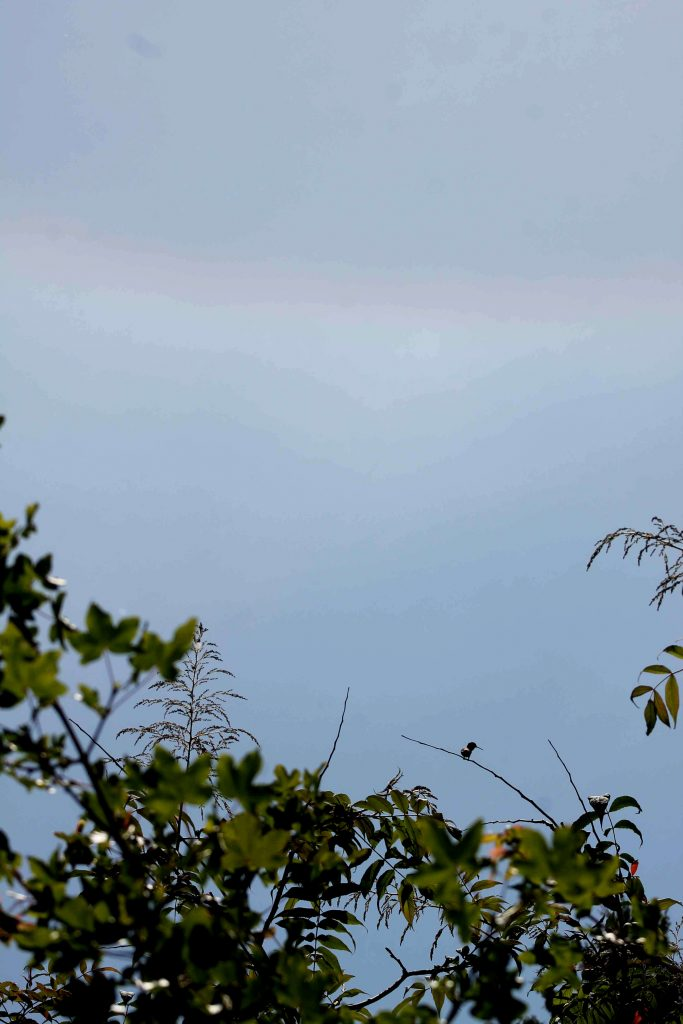 blue sunbow hummingbird IMG_6927