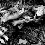 bw beaver bones IMG_6505