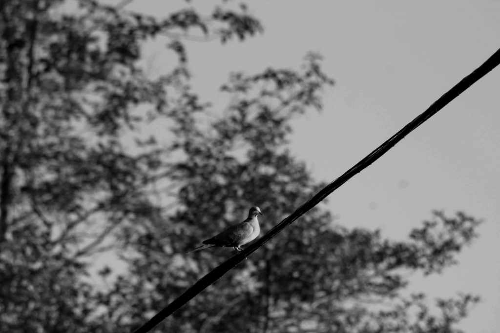 bw bird on a wire IMG_6607