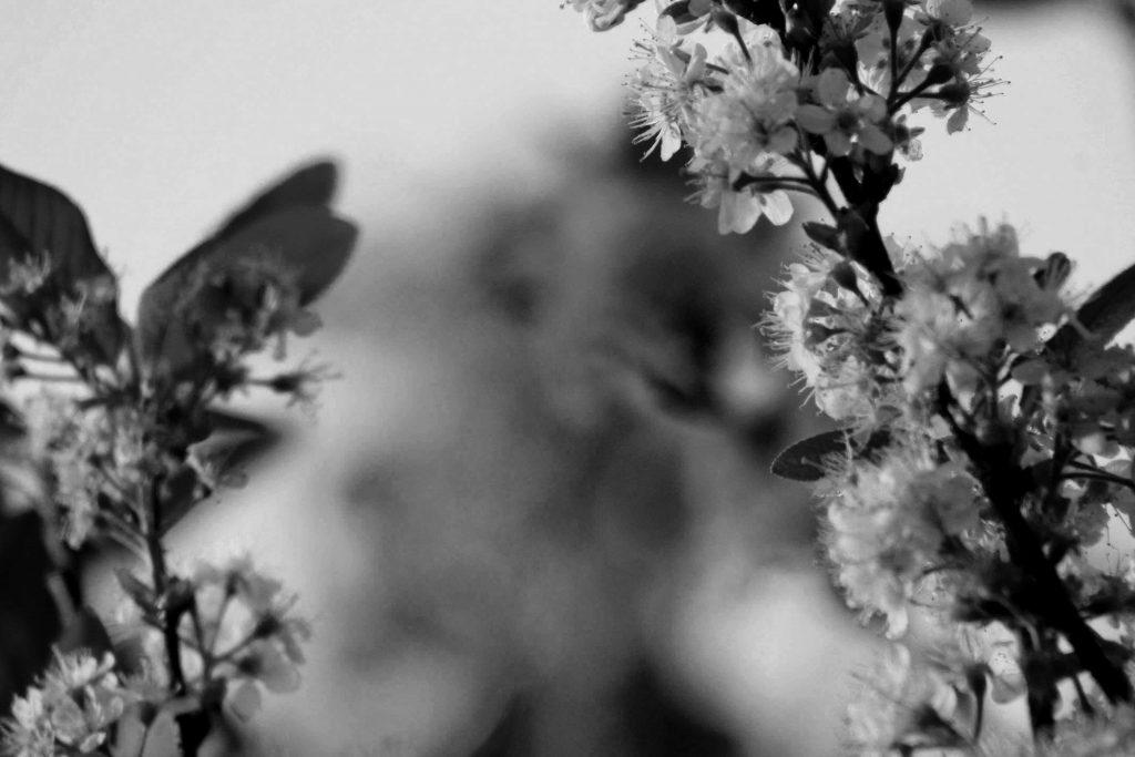 bw blossom IMG_6117