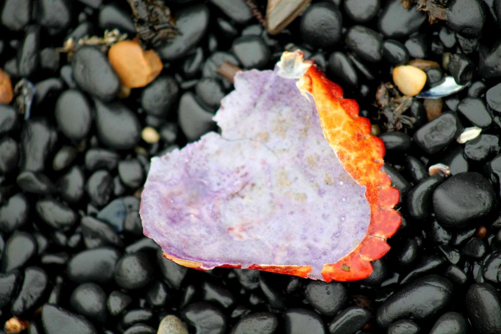 purple orange IMG_6653