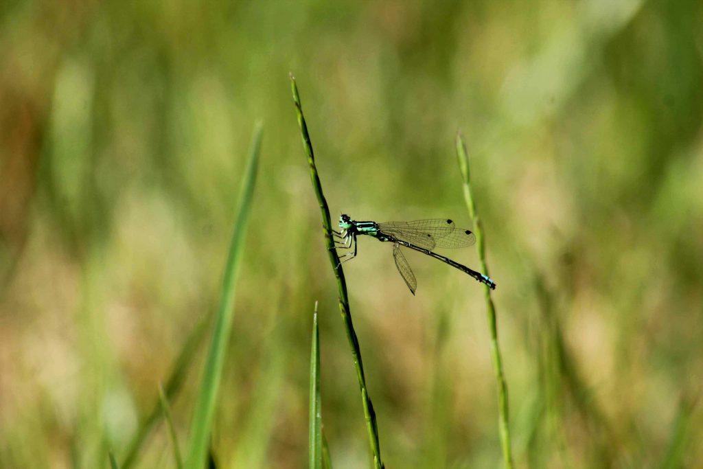 green IMG_7012