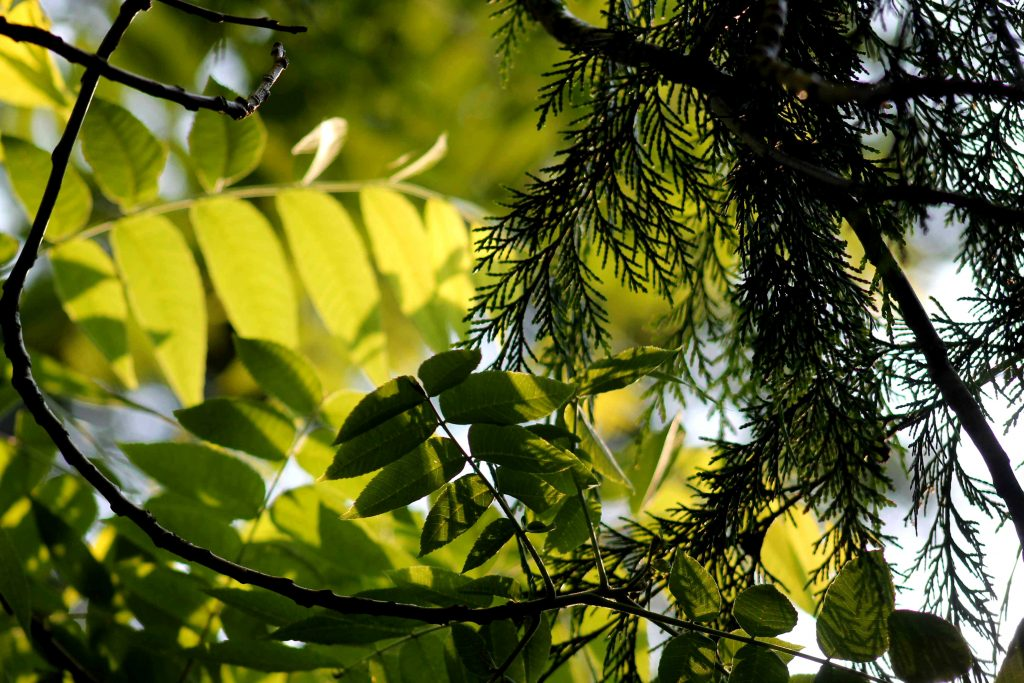 green IMG_7118