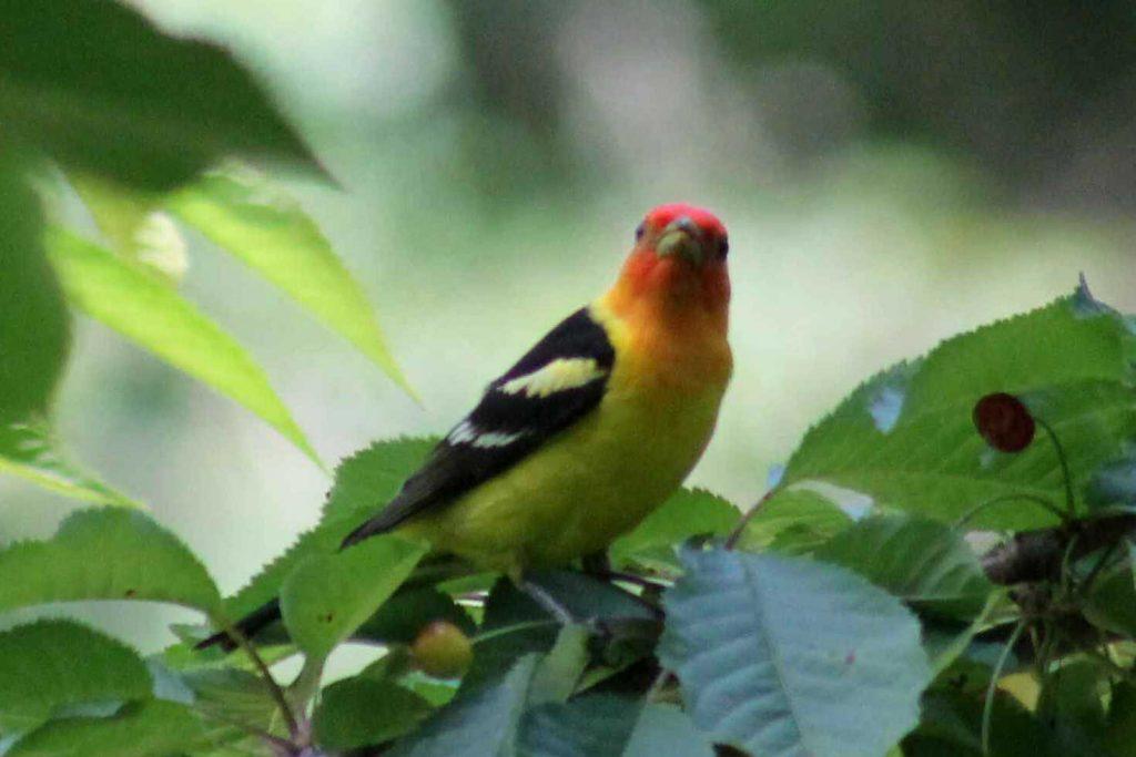 yellow IMG_7168